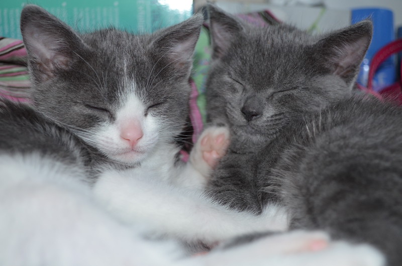 M&M - we had enough, naptime!