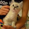 Foster Smokey Kat