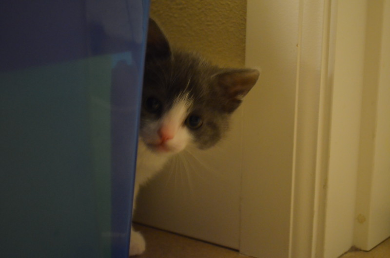Maja - now you can't see me...