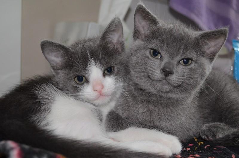 Maja & Michi - we're huggers, don't separate us! - Foster set #2