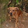 2.Buddy_Beagle.Dachs.mix_8.11.15