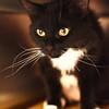 Meow Meow A35140232 a