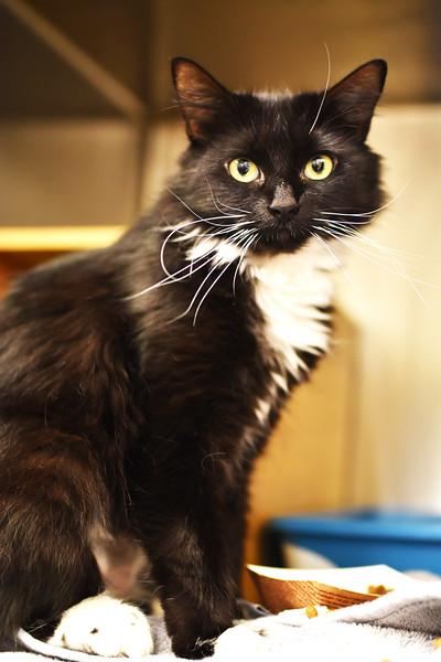 Meow Meow A35140232 b