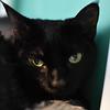 Puddie Cat A34791172 b