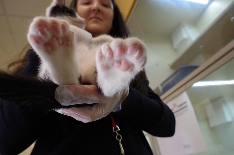 Bertie's beans
