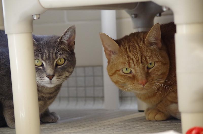 Silver & Tiger