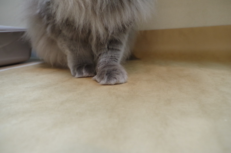Miss Kitty's paws
