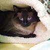 Mr Kitty / Zeno