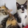 Basil & Poppy