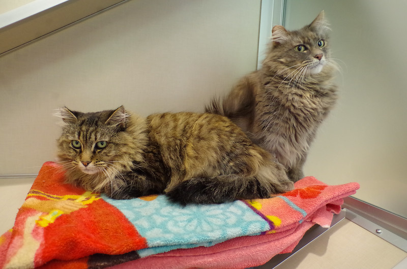 Lizzie & Annie