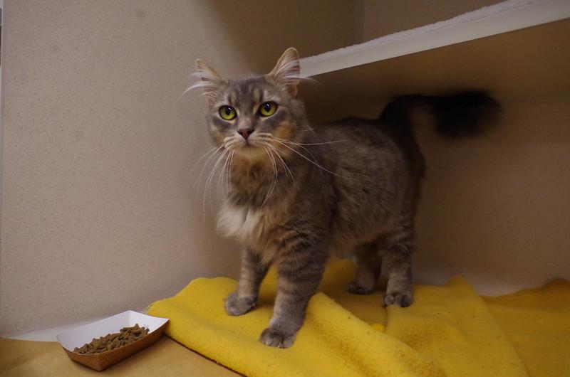 Foxy Cleopatra