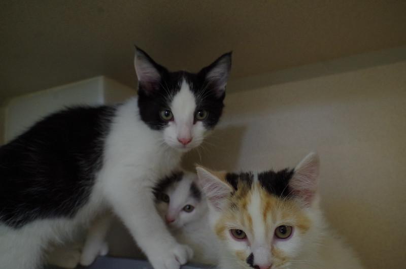 Bertie, Ethel & Margot