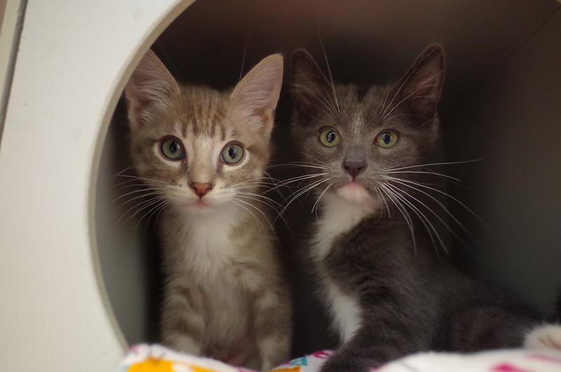 Skylar & Prim