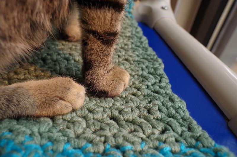 Hutch paws