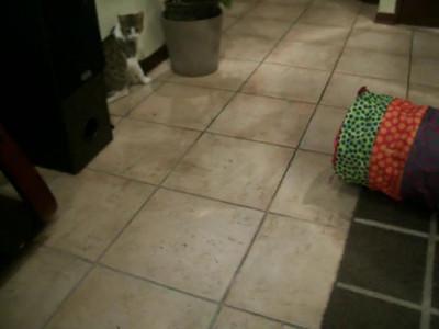 Pet Sitting - Rich's cat Bubu playing ball