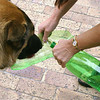"Hmmm - what to do to bring water with you when you go out with your pooch??  Try this:<br />  <a href=""http://instructables.com/id/Water-bottle---drinking-bowl/#step1"">http://instructables.com/id/Water-bottle---drinking-bowl/#step1</a>"