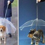 PET UMBRELLA - such a PERFECT item for life in Costa Rica!!! Keep your pet happy and drier in rain, sleet or snow (aren't we blessed we don't have to worry about the last 2 things)! Now you can protect your pet from the harsh elements with a uniquely designed umbrella especially made for pets.  Buy via Amazon:  http://amazon.com/Pet-Umbrella-Keeps-your-Comfotable/dp/B000T0JUE8/ref=sr_1_1?s=pet-supplies&ie=UTF8&qid=1354807738&sr=1-1&keywords=Pet+Umbrella .