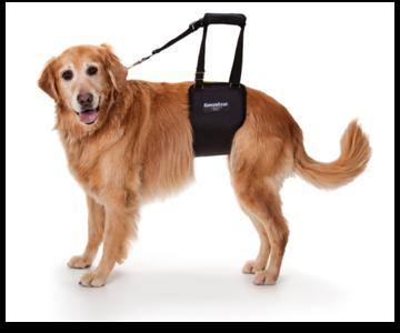 http://GingerLead.com - Dog Support & Rehabilitation Harness