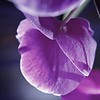 Orchid the underside wwm