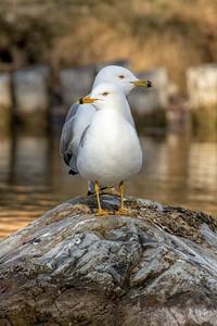 Seagulls Juxtapose