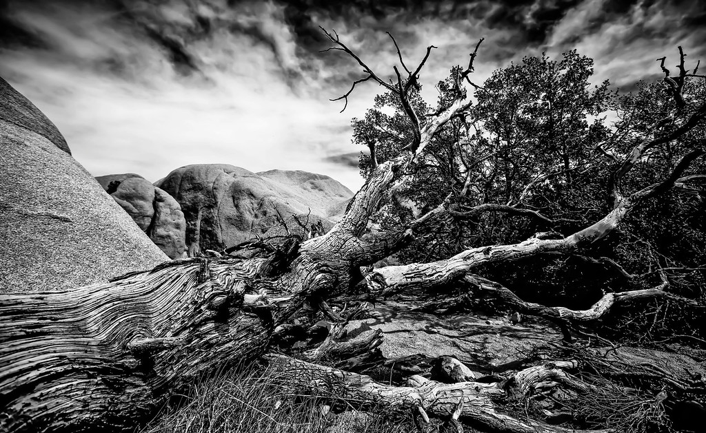 Textured Decay B&W