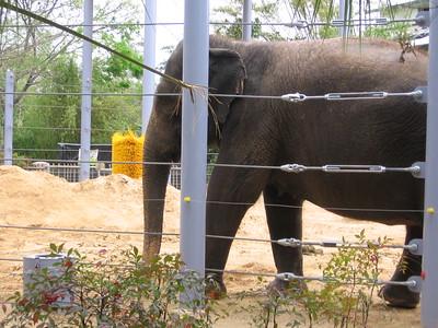 2008-03 Zoo