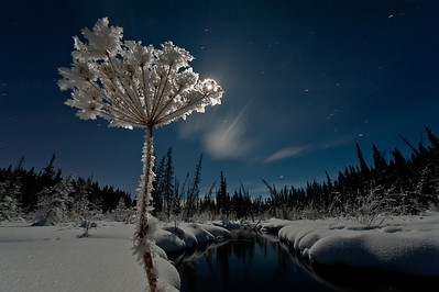 Moonlit midnight winter wildland. McIntyre Creek near Whitehorse, Yukon Canada. The creek is open year round even during heavy snow.