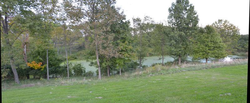 Pond pics