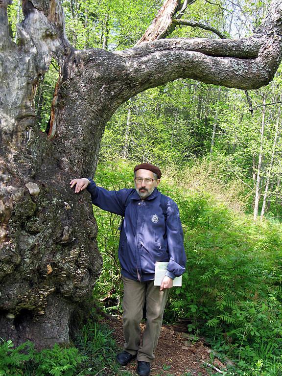 Lev in Oranienbaum park