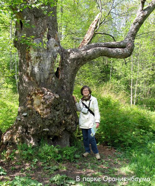 irina in Oranienbaum park