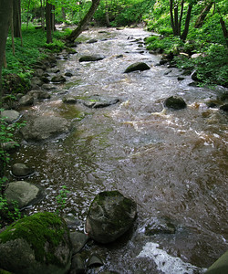 The river Carost', lower (Petrovskii) park.