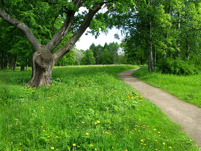 Path near Menshikov Palace