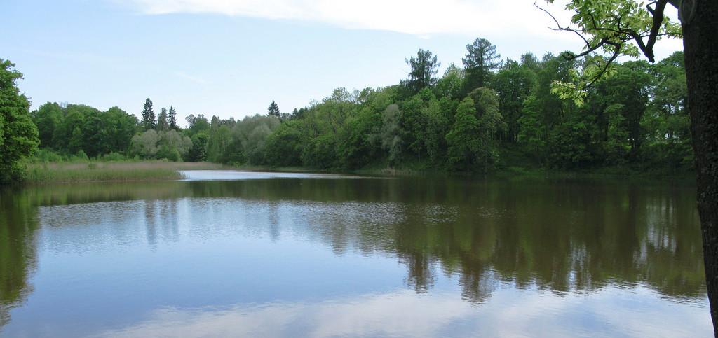 The lower pond. Petrovslii park.