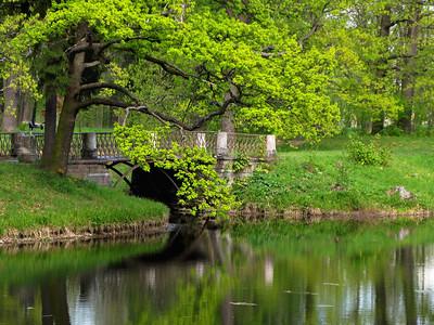 Old bridge on the pond. Alexander park.