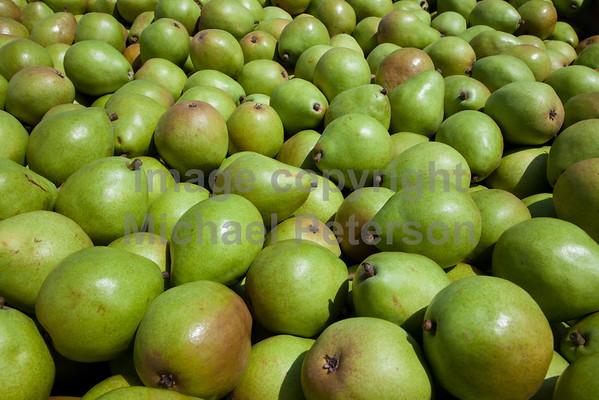 Fruit_Pears11-1006