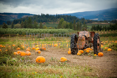 PumpkinPatch_1061