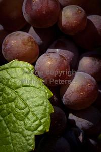 Vineyards12-1002