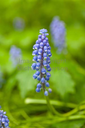 Wildflowers13-1001