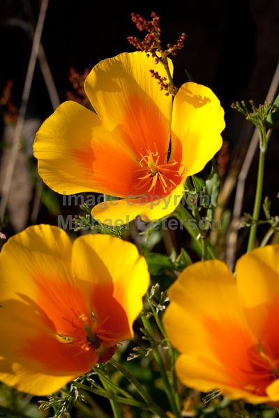 flowers12_-2003