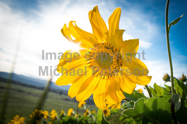 Wildflowers2015-1012