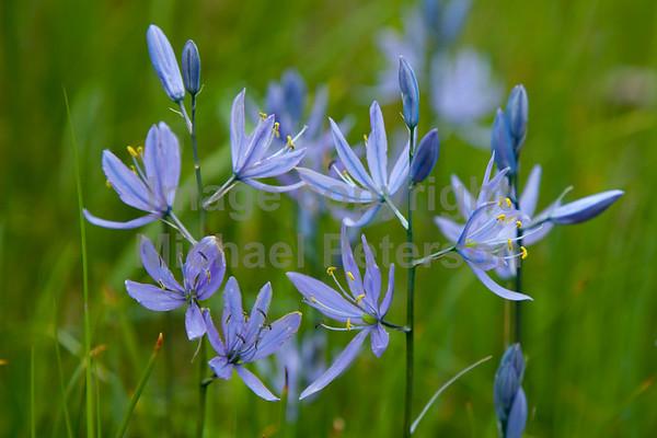 FlowersWild11_1005