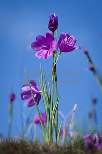 Flowers12-1006