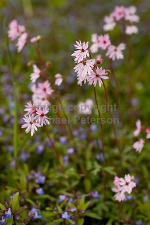 FlowersWild11_1001