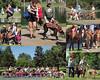greyhound collage 8x10c