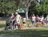 2013 Elk Grove K9 Cancer Walk 167