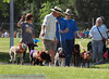 2013 Elk Grove K9 Cancer Walk 103