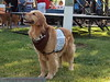 2013 Elk Grove K9 Cancer Walk 024