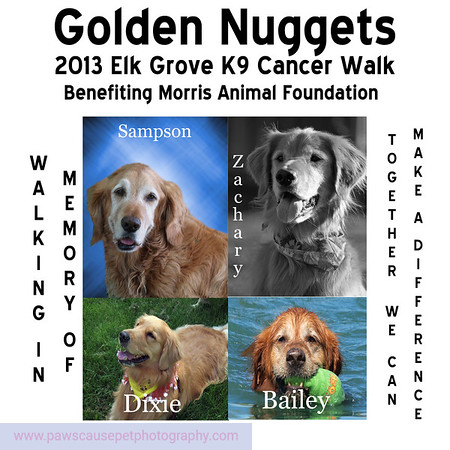 This is the T-Shirt Design that will be worn by members of the Sacramento Golden Retriever Meetup at this years Morris Animal Foundation Elk Grove Ca K9 Cancer Walk.