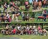 greyhound collage 8x10d