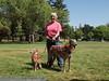 2013 Elk Grove K9 Cancer Walk 326